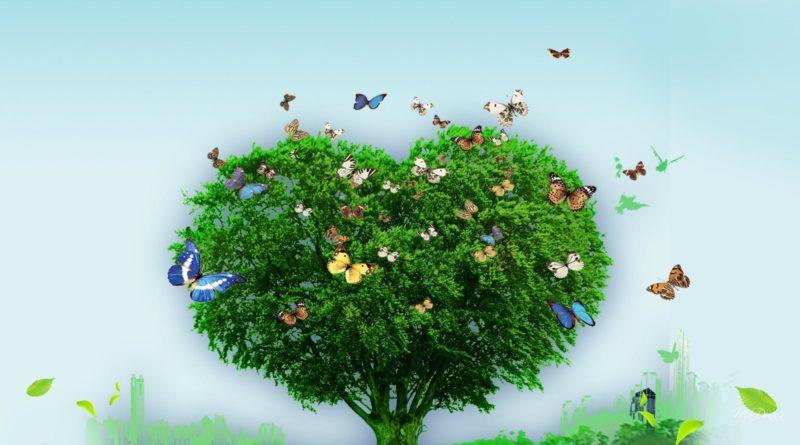7. Sınıf Müzik dersi kitabı sayfa 49 Ağaç türküsünün melodika ile Çalınışı ve Söylenişi